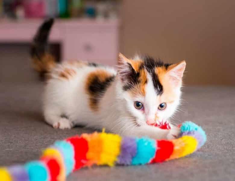Kediler için Gerekli Malzemeler